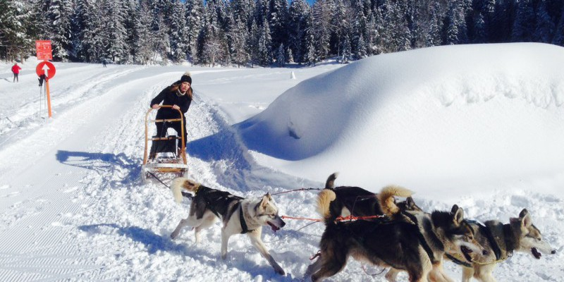 Hundeschlittenworkshop als Teamevent