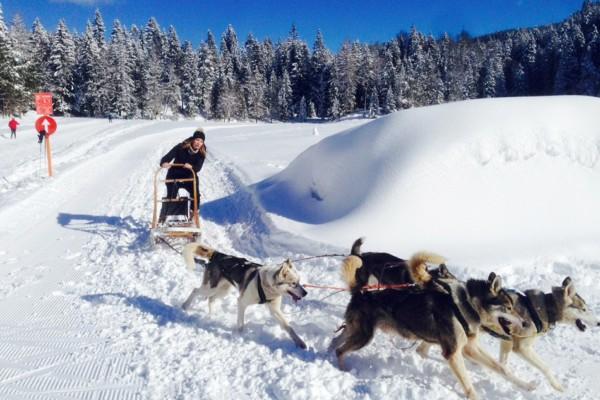 Hundeschlittenrennen teamevent